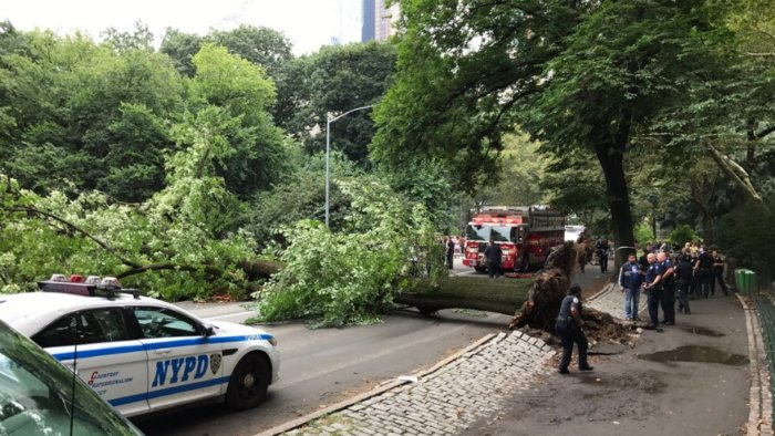A falling tree in Central Park injured a woman and three children Tuesday.