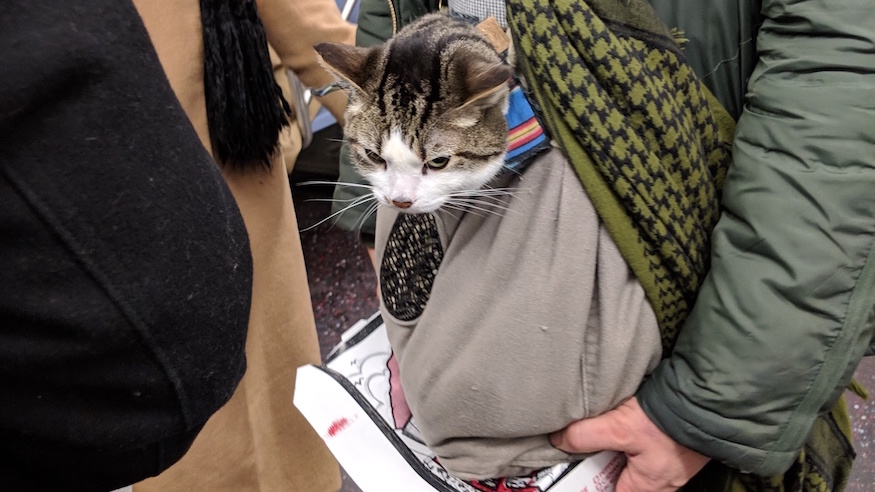 nyc subway cat morty commuting mta